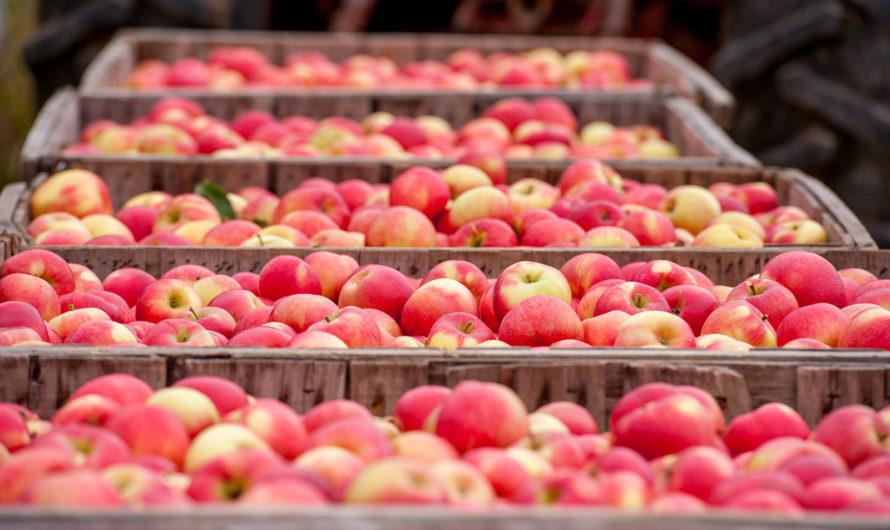 Чем обрабатывают яблоки для длительного хранения, препараты для покрытия