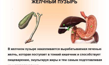 kak-polnocenno-zhit-posle-udaleniya-zhelchnogo-puzyrya-2