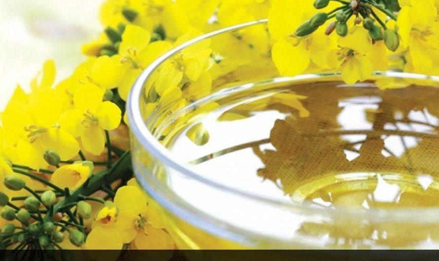 Рыжиковое масло: полезные свойства, противопоказания, польза и вред