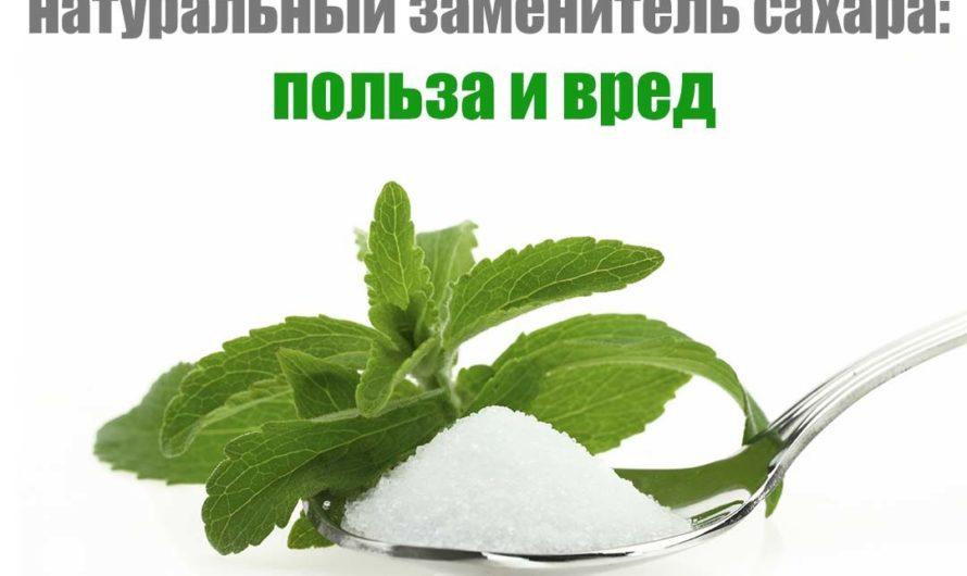 Стевия (заменитель сахара) польза и вред, противопоказания